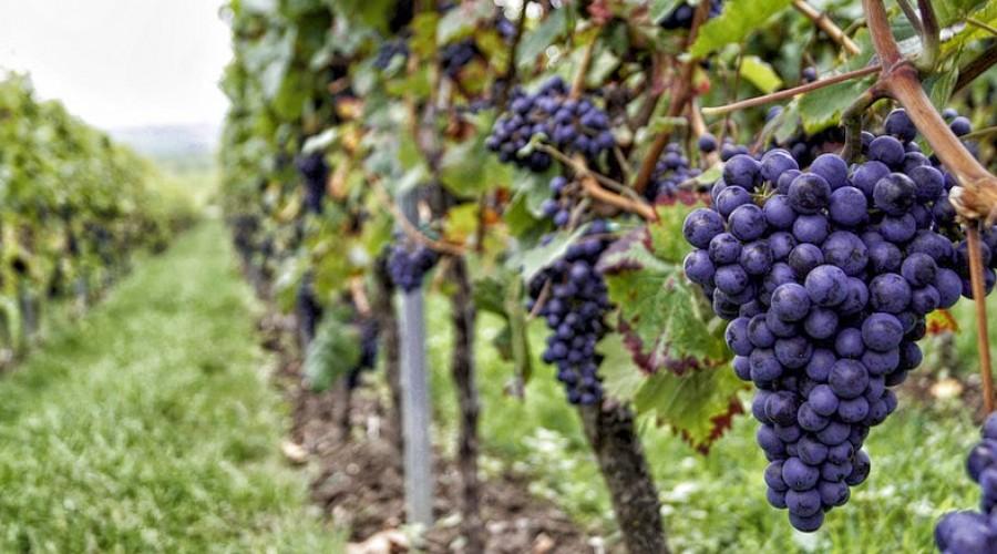Private tour of Amarone wine cellar lake Garda Verona